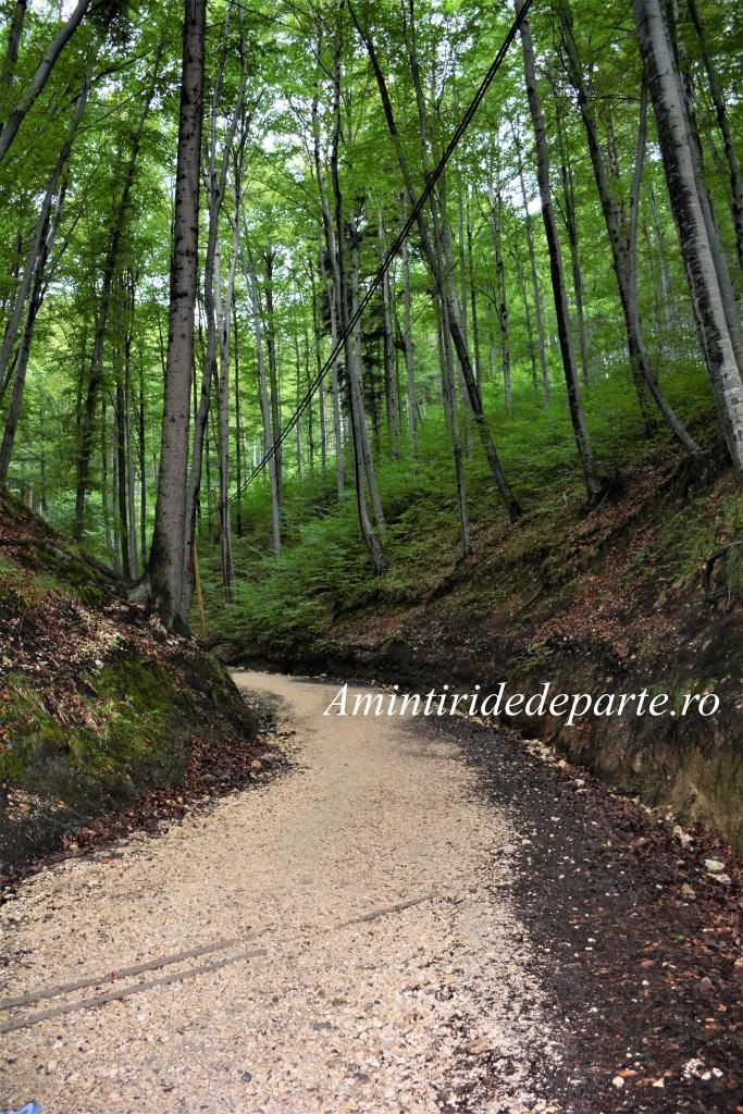 drumul catre Pestera Valea Cetatii