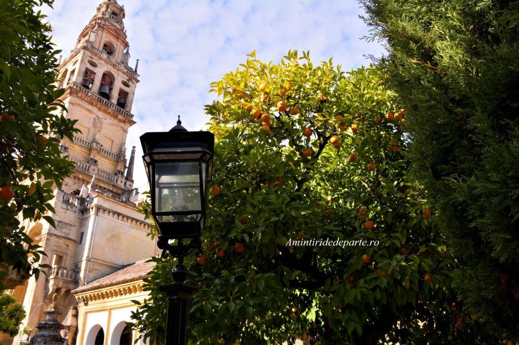 Patio de los Naranjos, Cordoba